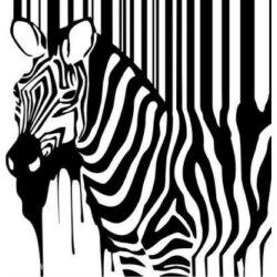 Falmatrica - Zebra, 46 x 48 cm